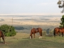 Offbeat Riding Safaris